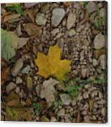 Leaves On The Rocks Canvas Print