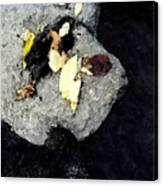 Leaves On The Rocks Canvas Print