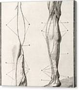 Leg Nerve, 18th Century Illustration Canvas Print