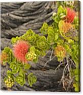 Lehua Flower Canvas Print