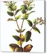 Lehua Ohia Art Canvas Print