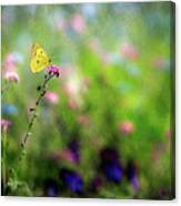 Lemon Butterfly In Summer Meadow  Canvas Print