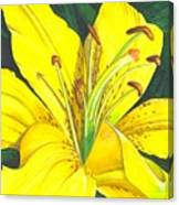 Lemon Lily Canvas Print