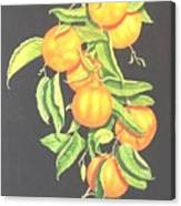 Lemon Mandarine Suite Canvas Print