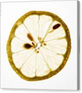 Lemon Slice Canvas Print
