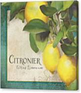 Lemon Tree - Citronier Citrus Limonum Canvas Print