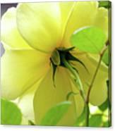 Lemon Yellow Rose Canvas Print