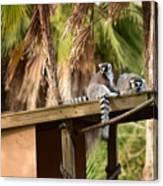 Lemur Couple Canvas Print