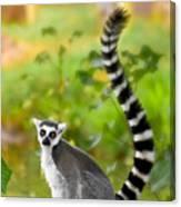 Lemur Lemur Canvas Print
