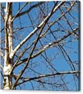 Lenox Sky Canvas Print