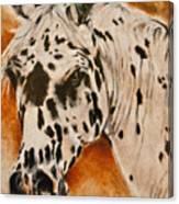 Leopard Appy Canvas Print