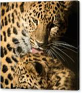Leopard Cub Love Canvas Print