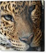 Leopard Face Canvas Print