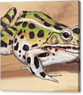 Leopard Frog No 1 Canvas Print