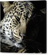 Leopard II Canvas Print