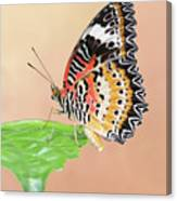 Leopard Lacewing Butterfly #2 V2 Canvas Print