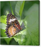 Leopard Lacewing Canvas Print
