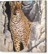 Leopard On The Rocks Canvas Print