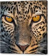 Leopard Panthera Pardus, Ndutu Canvas Print
