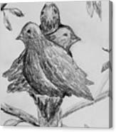 Les Trois Oiseaux Canvas Print