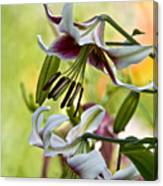 Leslie Woodriffe Lily Canvas Print