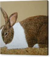 Les's Rabbit Canvas Print
