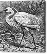 Lesser Egret Canvas Print