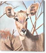 Lesser Kudu Canvas Print