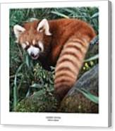 Lesser Panda Ailurus Fulgens Canvas Print