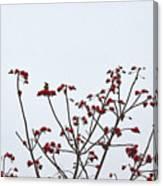 Lesser Yellownape Woodpecker Canvas Print