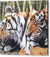 Let Sleeping Tigers Lie Canvas Print