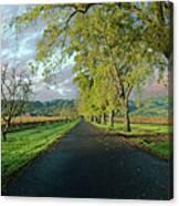Let's Drive Through The Vineyard Canvas Print