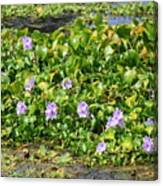 Lettuce Lake Flowers Canvas Print