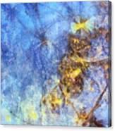 Leucospermous Mental Picture  Id 16098-052430-80880 Canvas Print