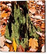 Lichen Castle In Autumn Leaves Canvas Print