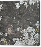 Lichen On Wood Canvas Print