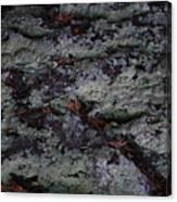 Lichen Texture Canvas Print