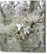 Lichens In The Plums Canvas Print