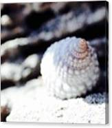 Life Of A Shell In Eleuthera Canvas Print