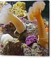 Life Under The Sea In Monterey Aquarium-california Canvas Print