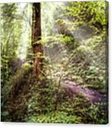 Light Along The Trail Canvas Print