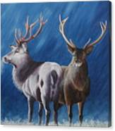 Light And Dark Stags Canvas Print