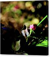 Light And Shadow In The Garden Canvas Print