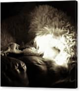 Light As He Tries To Sleep Canvas Print