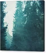 Light Coming Through Fir Trees In Mist Canvas Print
