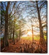 Light In The Cypress Trees II Canvas Print