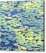 Light On Lily Pads Canvas Print