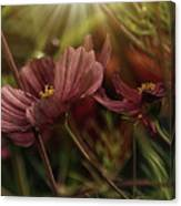 Light On The Cosmos Canvas Print