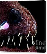 Light Organ Of Threadfin Dragonfish Canvas Print
