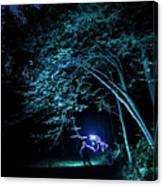 Light Painted Arched Tree  Canvas Print
